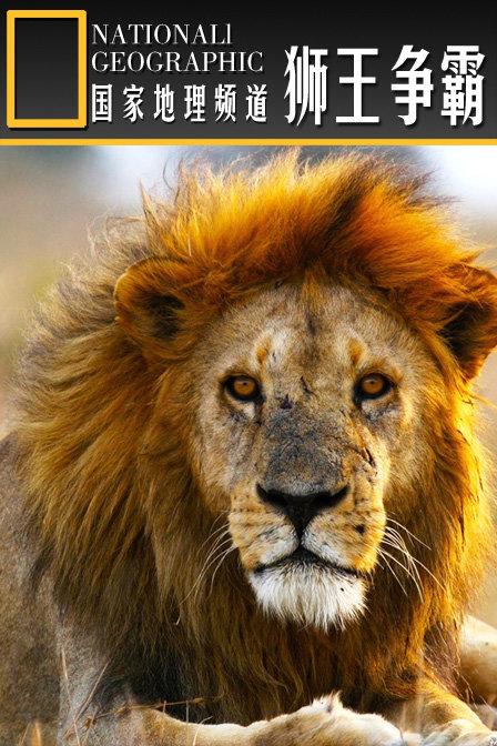 微信头像自然风景狮子