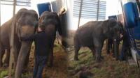 见义勇为大象撑起事故卡车