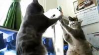 两只猫咪面对面拍手,两个非常无聊的人给配上了音
