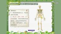 蘇教版四年級科學下冊第一單元 骨骼與肌肉
