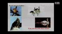 """初中英語教學視頻 Birdwatching 教學視頻,2015年全省教育系統教學技能競賽""""信息技術創新教學""""項目現場決"""