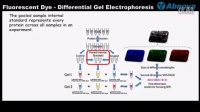 Fluorescent Dye - Differential Gel Electrophoresis
